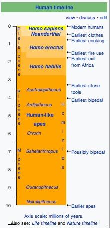 homotimeline