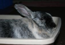 rabbitbox2