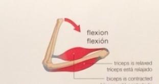 flexion