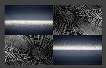 spiderwebs.jpg