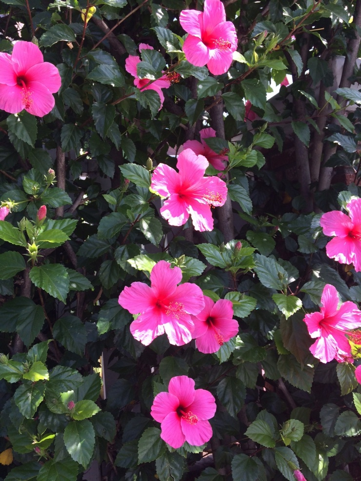 pinkflowers2