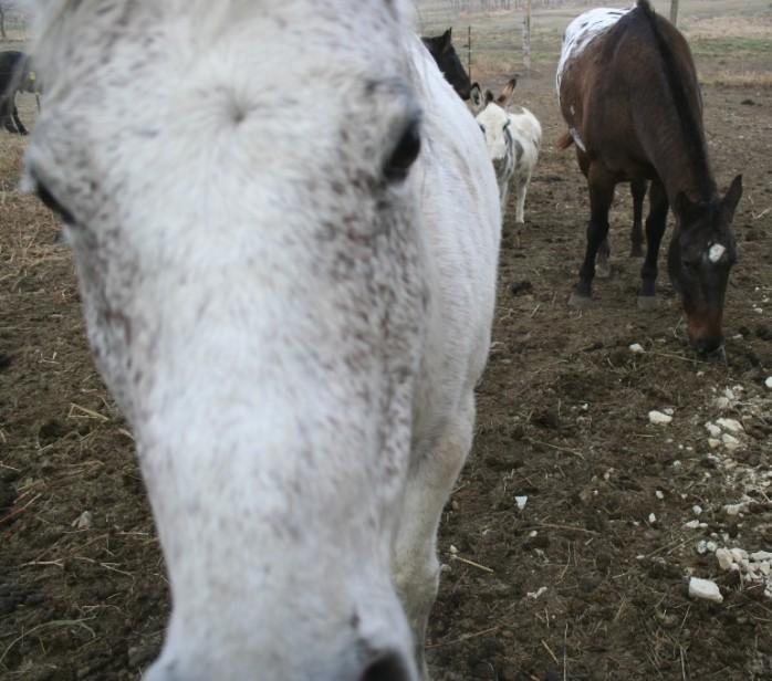 whitehorsecard