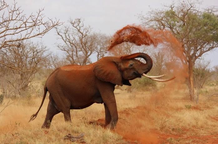 elephantsand