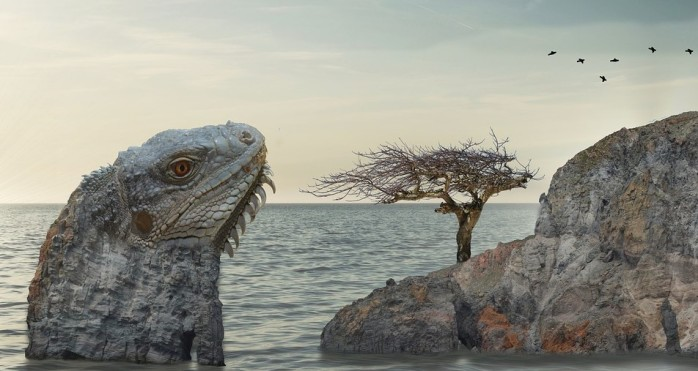 iguanarock
