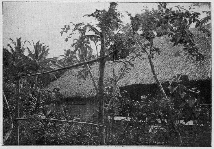 Jules Agostini's 1896 photograph of Gauguin's house in Punaauia.