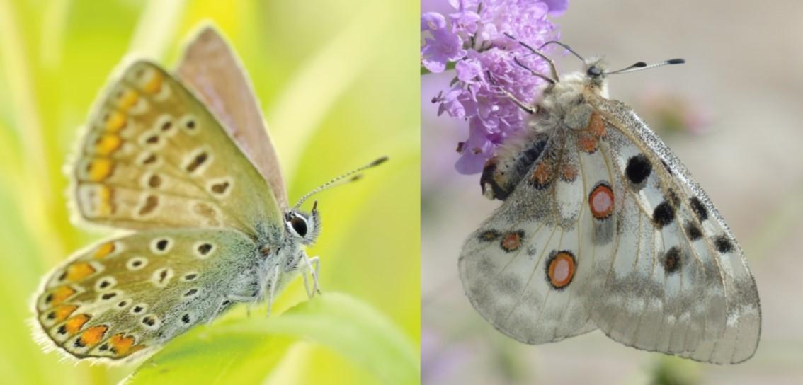 twobutterflies.jpg