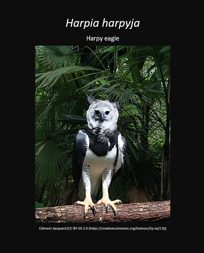 harpyeagle