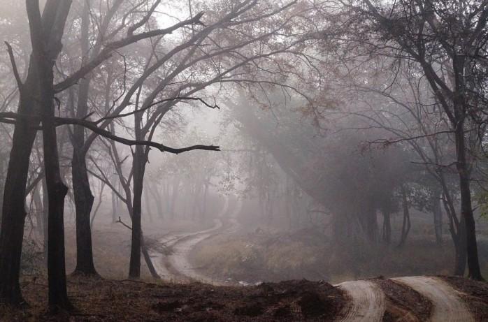 treepaths.jpg