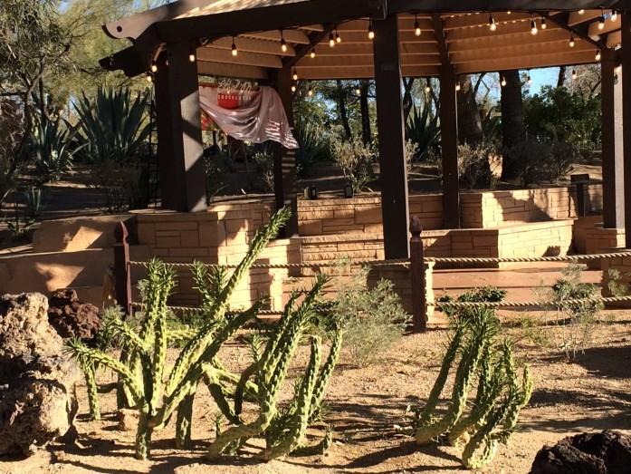 cactus16