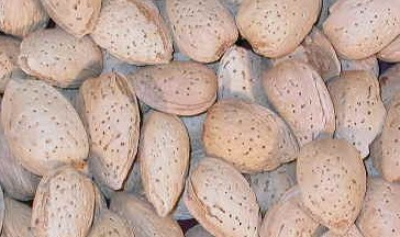 This image has an empty alt attribute; its file name is almond.jpg